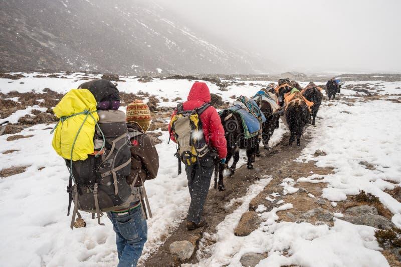 Trekkers, sherpas und Yakschäfer in der Himalajaregion lizenzfreie stockbilder
