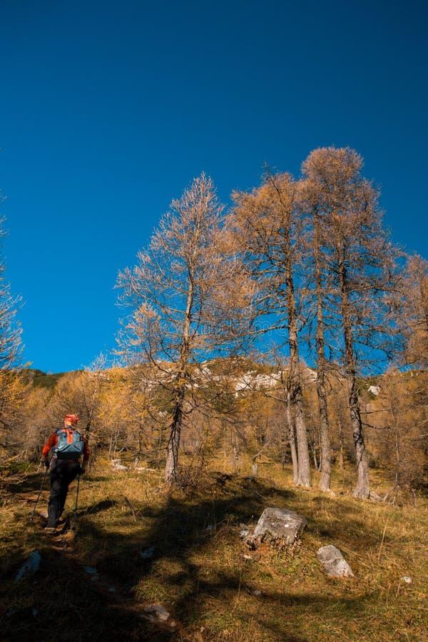 trekking стоковое изображение
