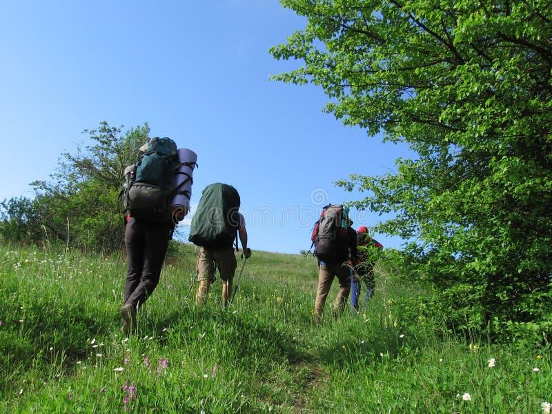 Download Trekking arkivfoto. Bild av tree, activatoren, miljö, mål - 994810