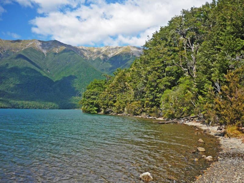 Trekking ao longo do lago em lagos parque nacional Nelson, Nova Zelândia imagens de stock royalty free