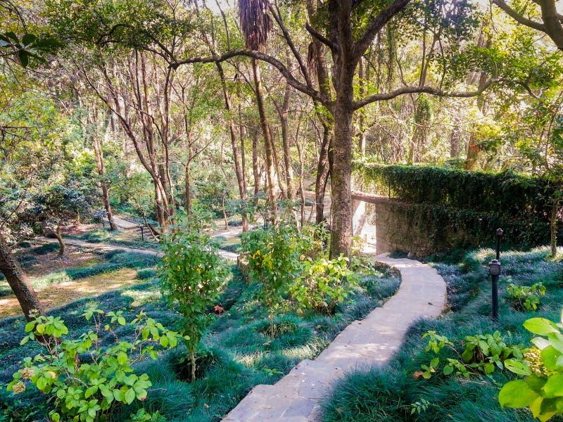Trekking bana bland träd och växter i baijnath Indien royaltyfria bilder