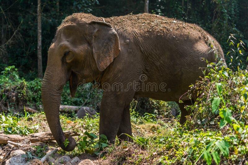 Trekking com elefantes foto de stock royalty free
