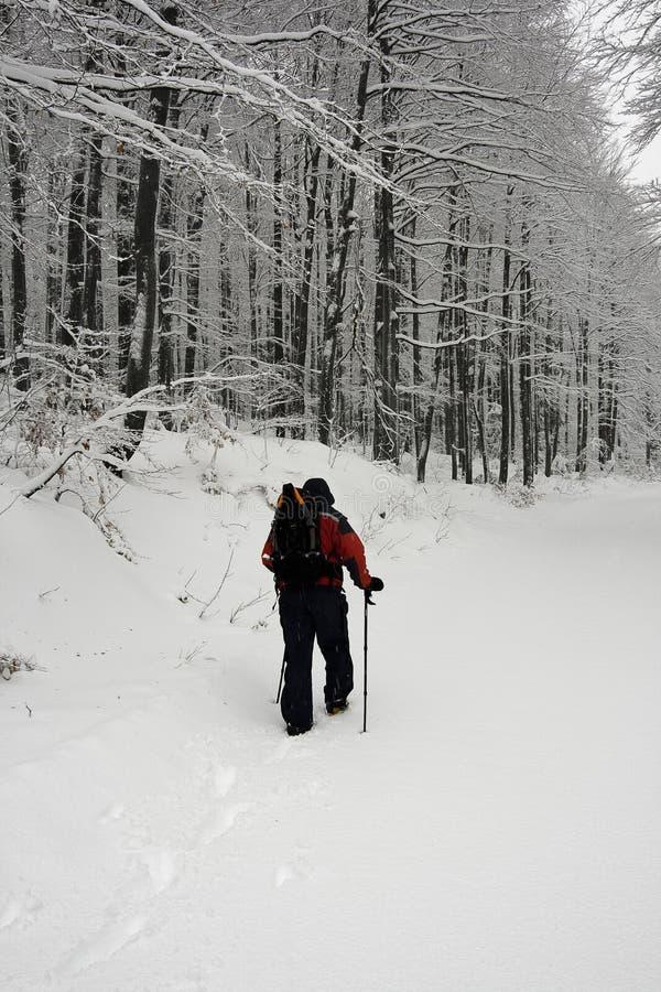Trekking dans la neige image libre de droits