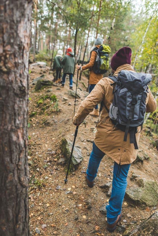 Trekking dei bambini e dei genitori in foresta immagini stock libere da diritti