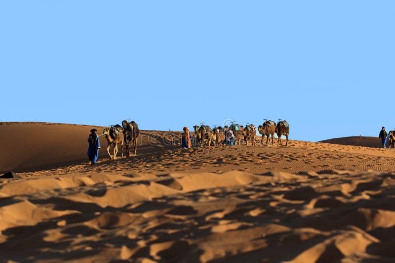 Trekking del caravan del cammello nel deserto del Sahara fotografia stock