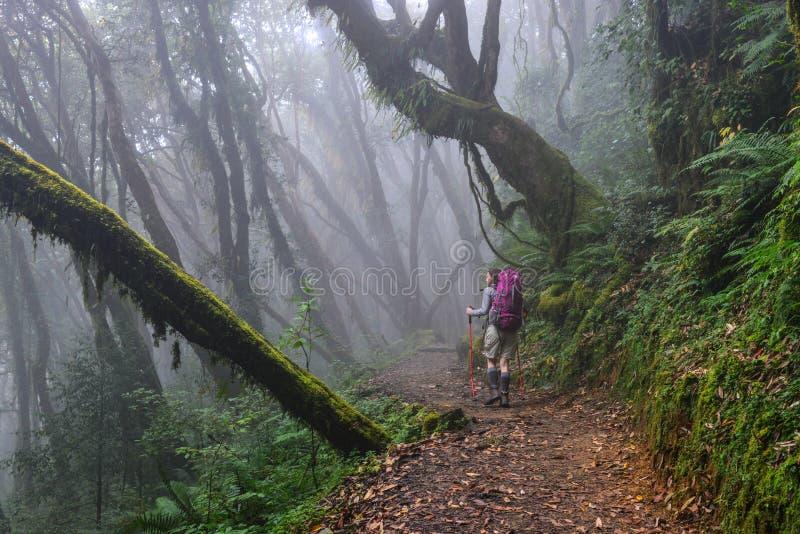 Trekking della gente in una foresta immagini stock libere da diritti