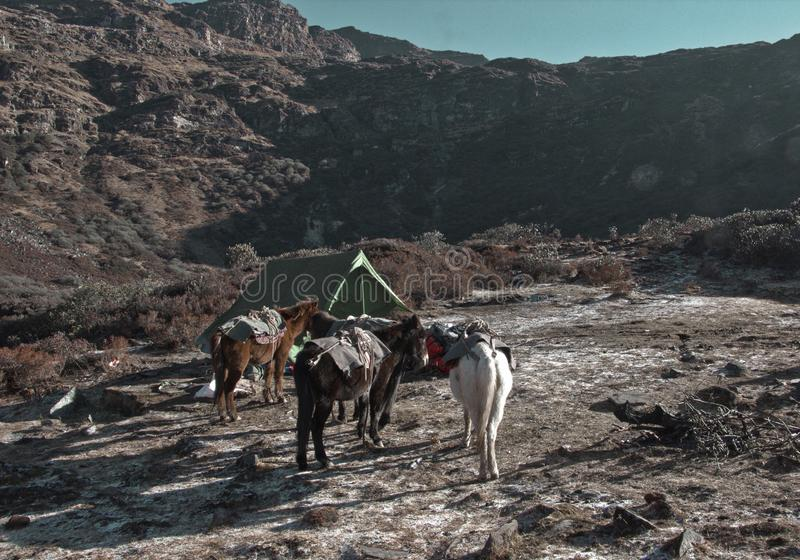 Trekking e campeggio del Bhutan fotografia stock libera da diritti