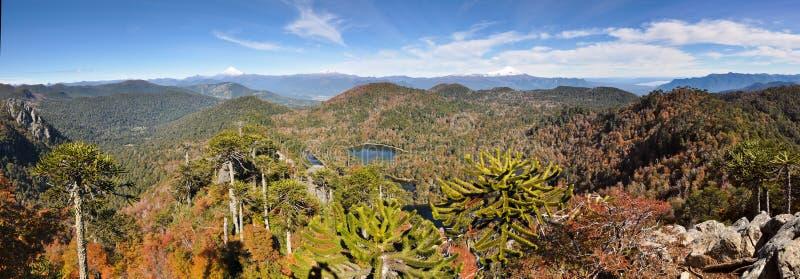 Trekking in EL Cani di Reserva, vicino a Pucon, il Cile immagine stock libera da diritti