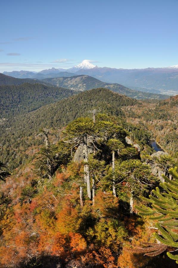 Trekking in EL Cani di Reserva, vicino a Pucon, il Cile immagini stock