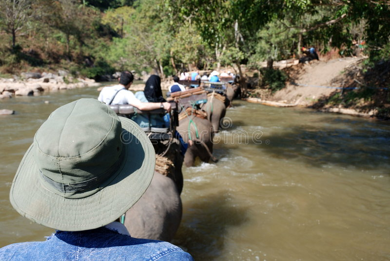 Download Trekking with elephants stock image. Image of river, queue - 4291329
