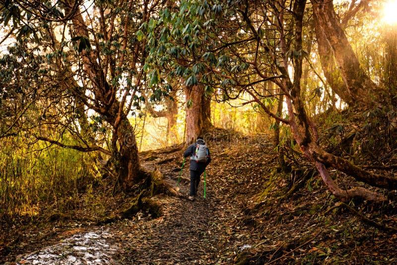 trekking en forêt photos libres de droits