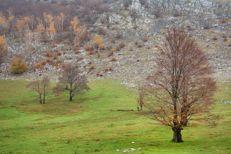 Trekking i Mehedinti berg i höst royaltyfria bilder