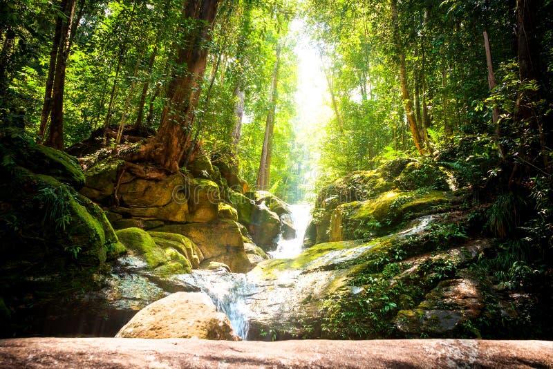 Trekking im Dschungel von Sarawak auf Borneo mit kleinem Wasserfall lizenzfreie stockfotografie