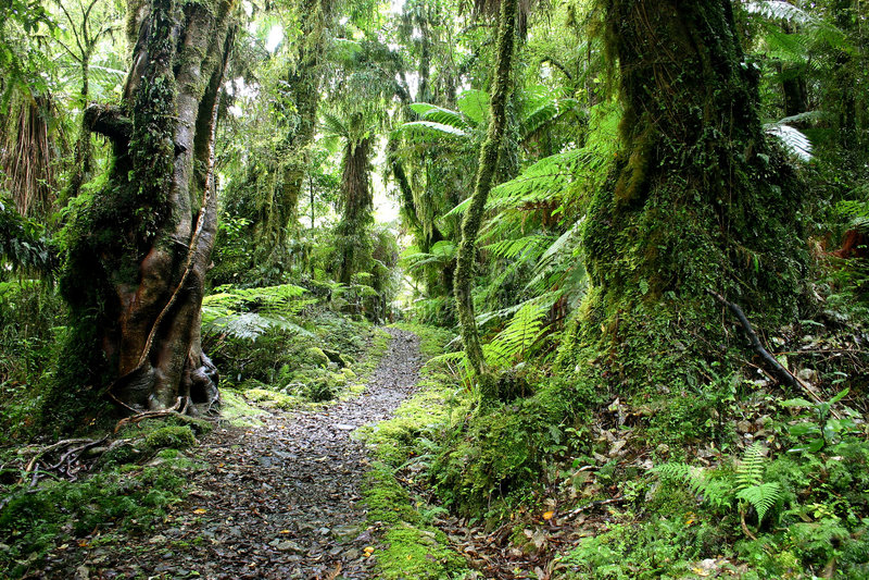 Trekking im grünen Paradies lizenzfreie stockbilder