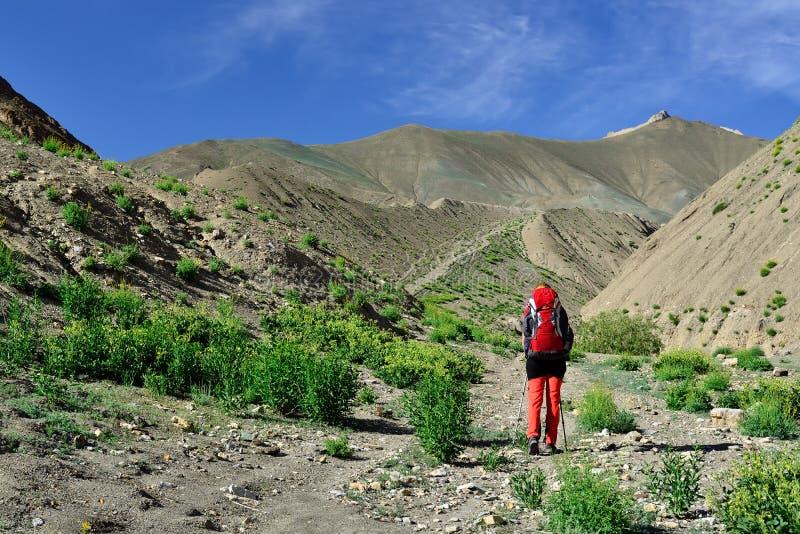 Trekking im Markha-Tal in Karakorum-Bergen nahe Leh-Stadt stockfoto