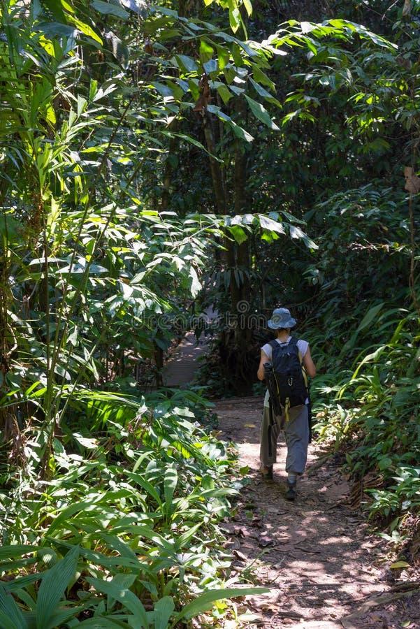 Trekking na floresta úmida de Bornéu foto de stock royalty free
