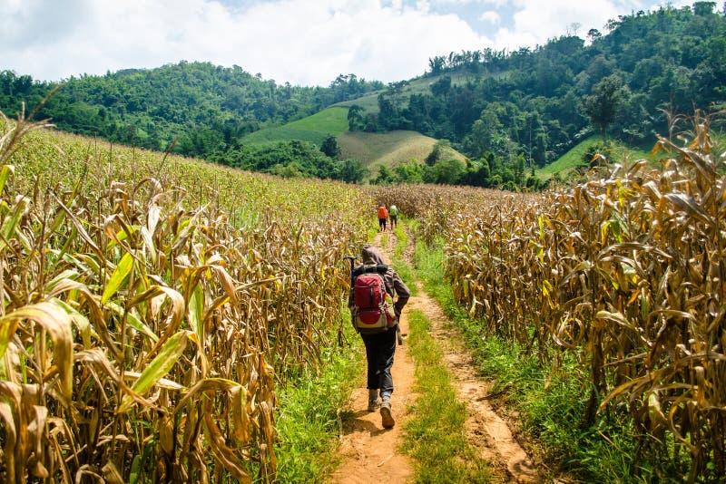 Download Trekking nel più forrest fotografia stock. Immagine di giungla - 55365054