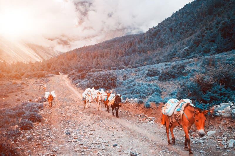 Download Trekking in Nepal stock afbeelding. Afbeelding bestaande uit overwork - 54087455