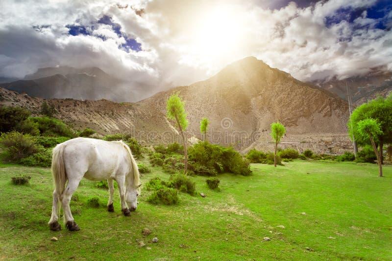 Download Trekking in Nepal stock afbeelding. Afbeelding bestaande uit annapurna - 54087817