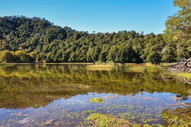 Trekking no EL Cani de Reserva, perto de Pucon, o Chile fotos de stock