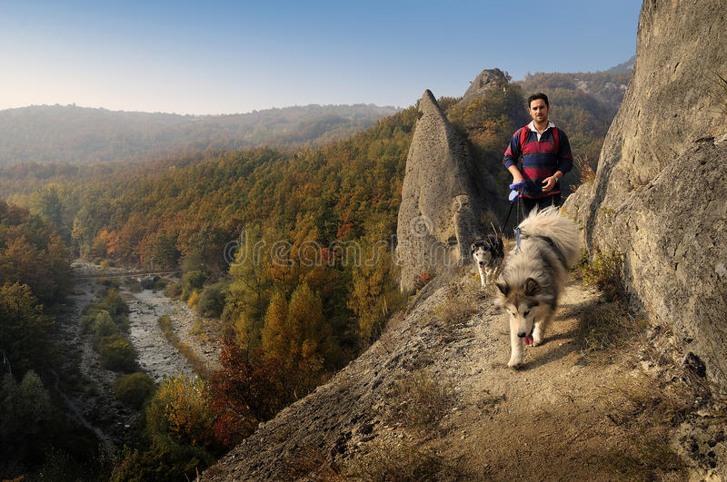 Trekking with snowdogs. A guy is walking with his dogs on a dangerous path royalty free stock photo