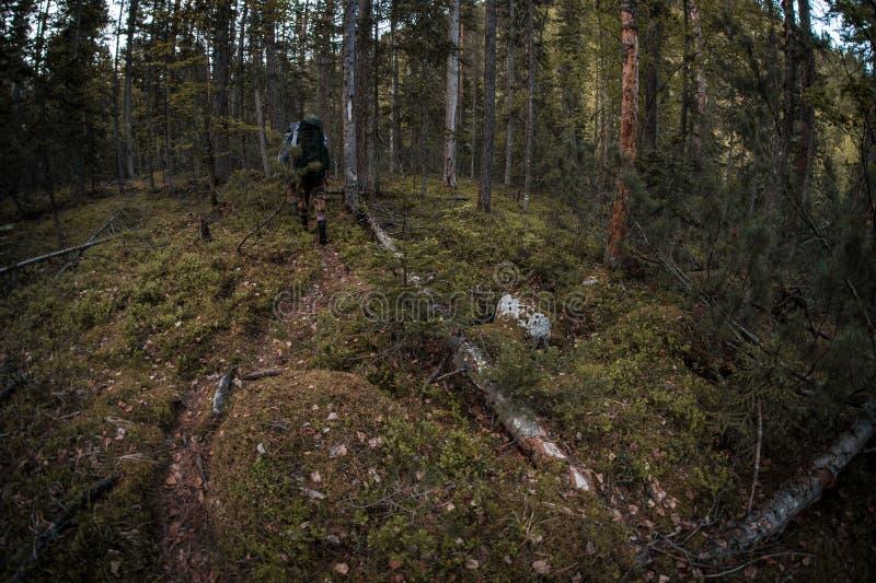 Trekking tajga las w Syberia, Rosja z instruktorem fotografia royalty free