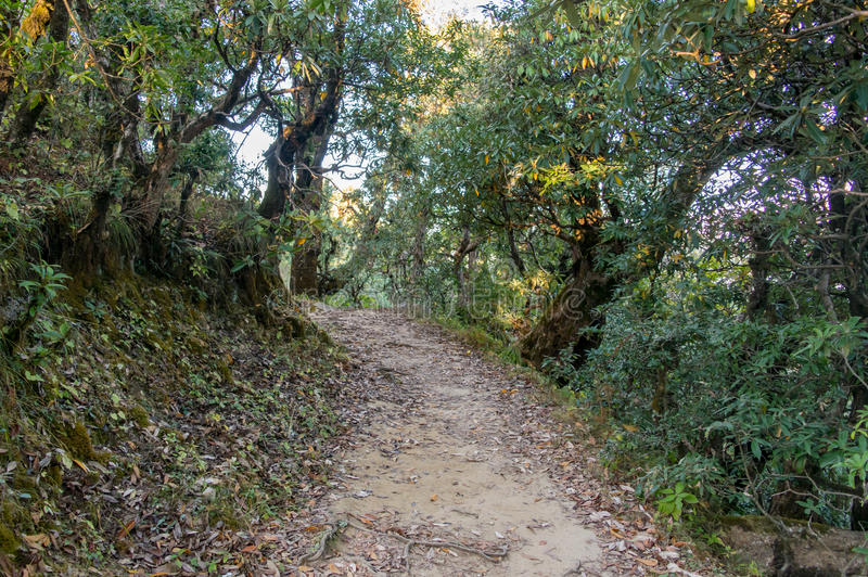 Trekking trail through thick temperate forest in mountains of Himalayas in Uttrakhand. Garhwal Himalayas in Uttrakhand provides immense opportunity of trekking royalty free stock photo