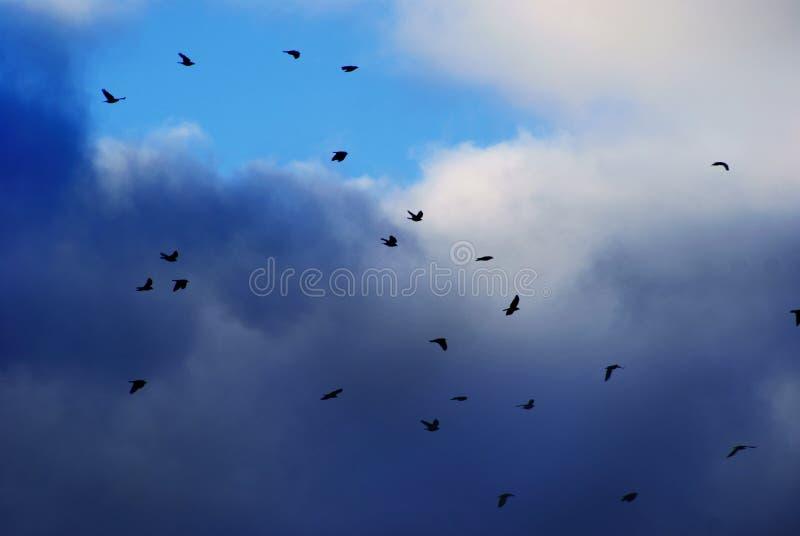 Trekvogels op een achtergrond van wolken stock foto's