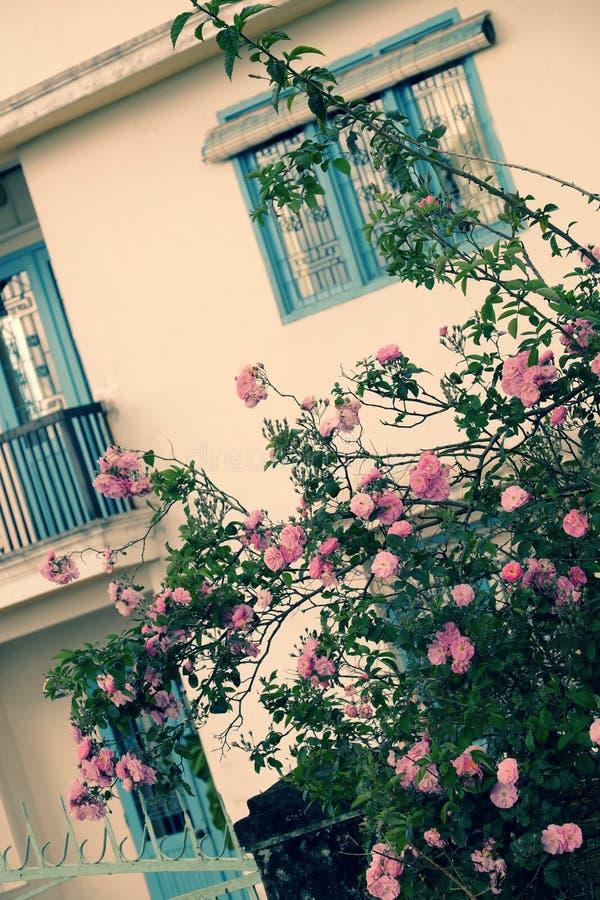 Treliça de escalada das rosas, parte dianteira bonita da cerca da casa fotografia de stock
