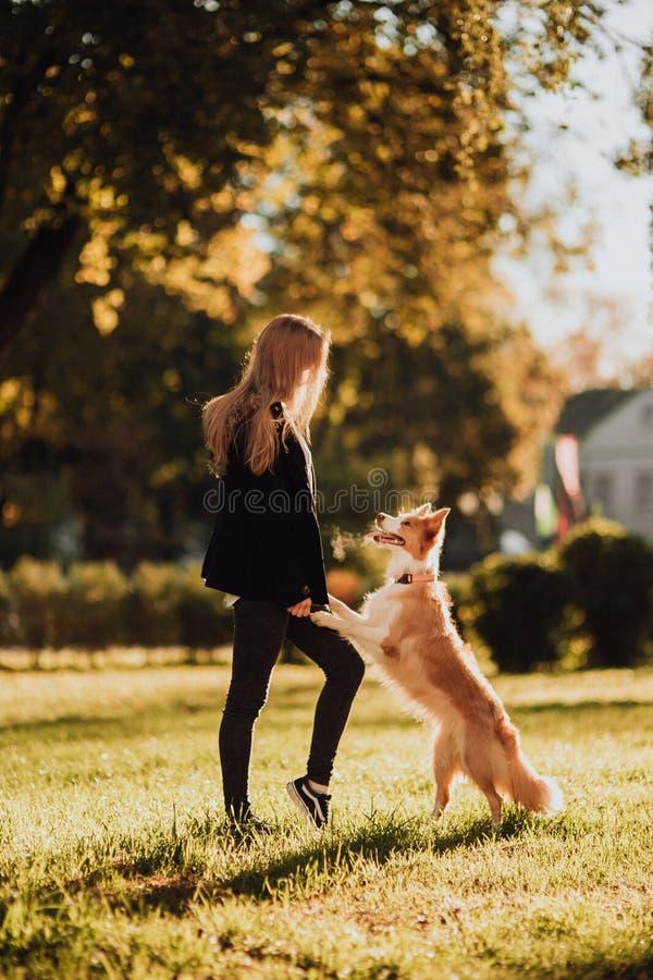 Trem louro da menina seu cão border collie no parque verde na luz do sol foto de stock royalty free