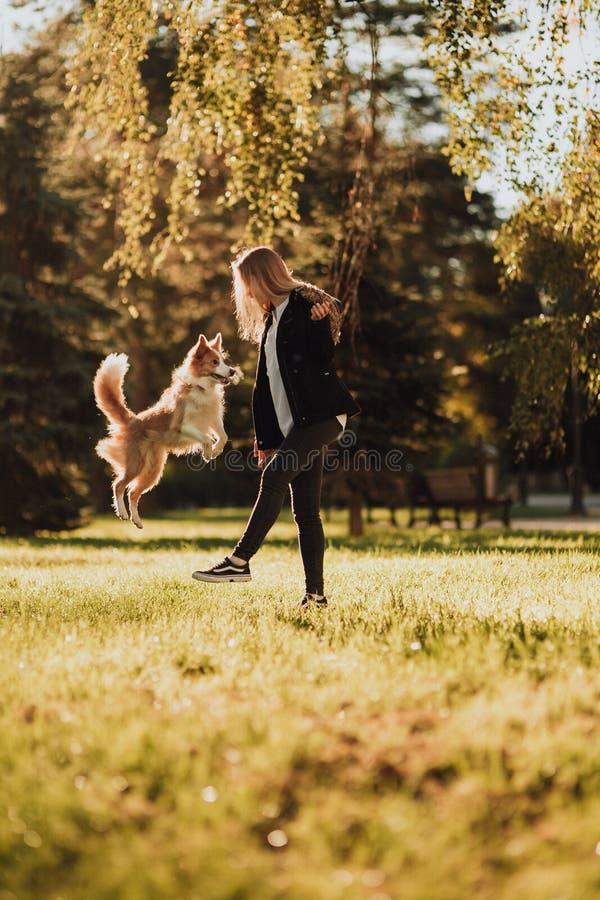 Trem louro da menina seu cão border collie no parque verde na luz do sol imagem de stock royalty free