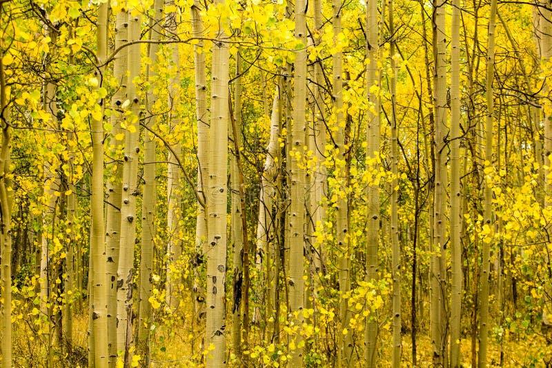 Trembles sur le passage de Kenosha, Fairplay le Colorado photo libre de droits