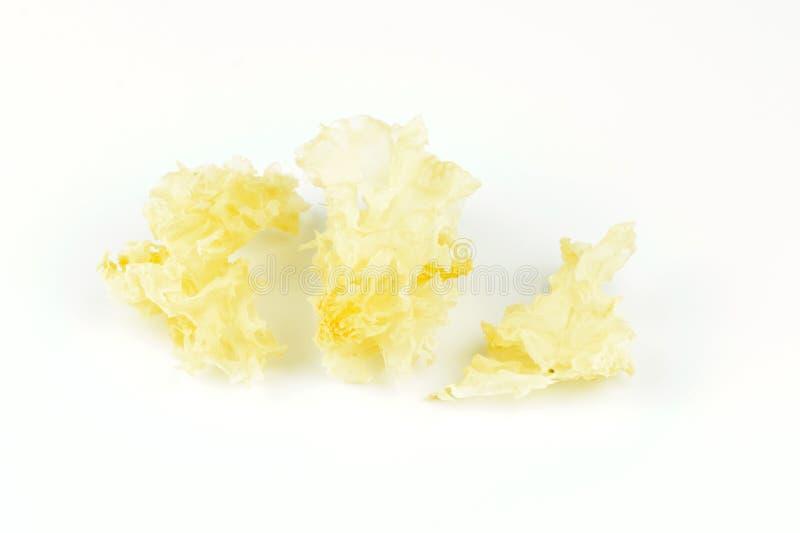 Tremella fuciformis& x28; silbernes Ohr mushroom& x29; lizenzfreie stockbilder