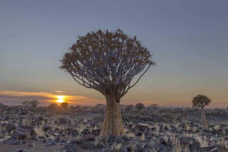 Tremer a árvore no nascer do sol imagens de stock royalty free
