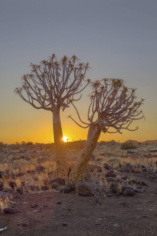 Tremer a árvore no por do sol imagem de stock