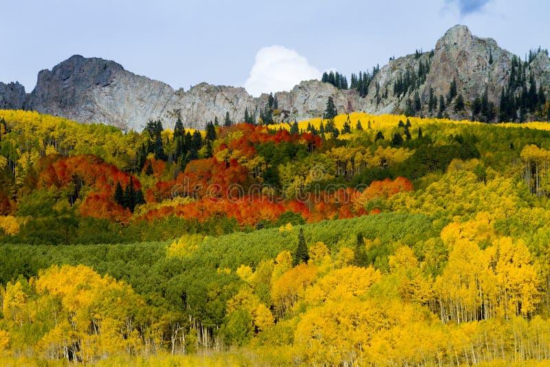 Tremule rosse, arancio, gialle e verdi sul passaggio di Kebler, Colorado fotografia stock libera da diritti