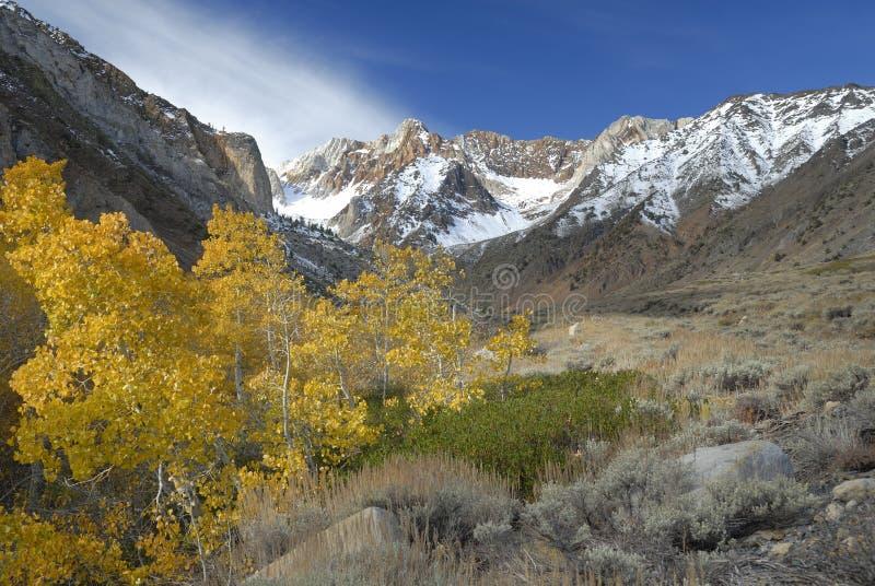 Tremule in sierra montagne di Nevada fotografie stock libere da diritti