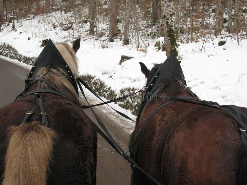 trenó aberto do Dois-cavalo imagem de stock royalty free