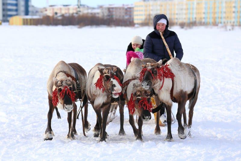 Trenó da rena que compete através da neve em um fundo da cidade imagem de stock