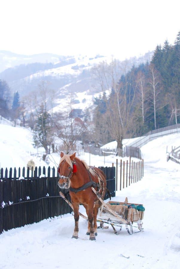 Trenó desenhado cavalo   fotografia de stock