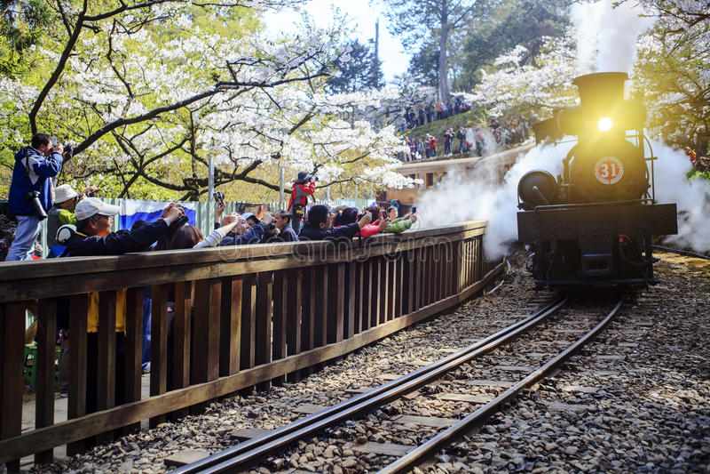 Tren del bosque en ferrocarril con Sakura en el área escénica nacional de Alishan fotos de archivo