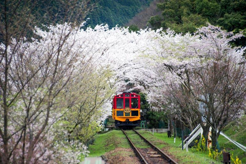 Tren escénico con el flor de Sakura fotografía de archivo