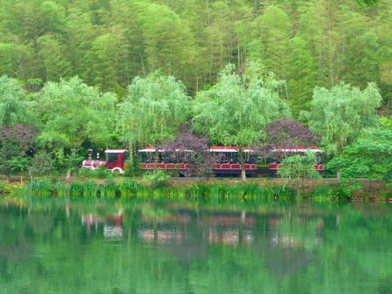 Tren turístico sin rieles que viaja a través del bosque imagen de archivo libre de regalías