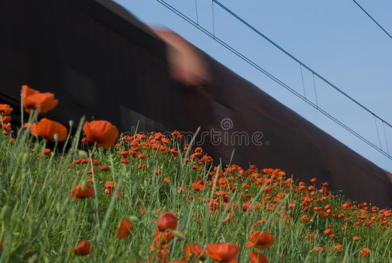 Tren y amapolas foto de archivo