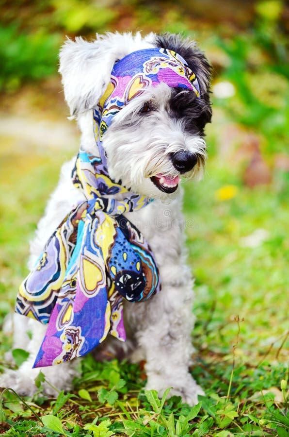 Trendig hund med näsduken fotografering för bildbyråer
