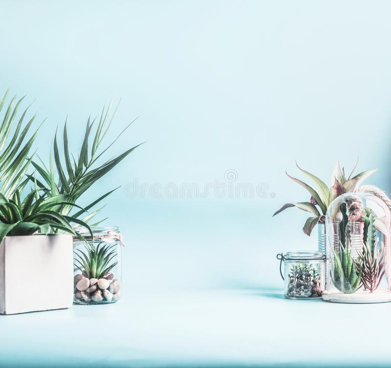 Trending home plant decor. Green house plants in pots, glass terrarium and jars on table at pastel blue background. Various. Succulent and cactus plants in royalty free stock photography