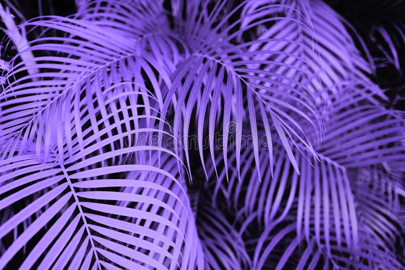 Ultra violet palm tree leaves stock images