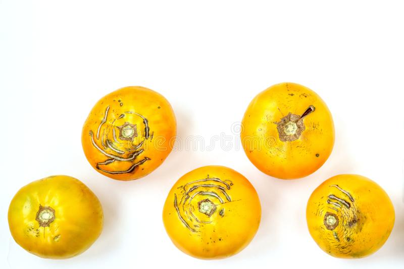 Trendy large ugly organic yellow tomatoes on a white background, horizontal orientation. Trendy large ugly organic yellow tomatoes on a white background, top stock images