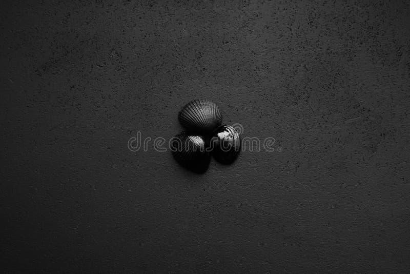 Trendy minimalistischer mattschwarzer Hintergrund mit Muscheln stockbild