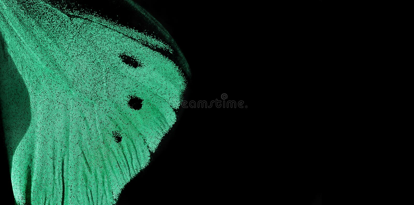 Trendy mint color. Wing of tropical butterfly on black background. copy spaces. royalty free stock image
